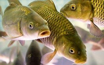 Расти рыбка большая, не маленькая