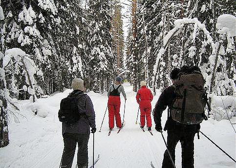 Ветераны спорта и профессора вузов обойдут на лыжах семь районов Новосибирской области