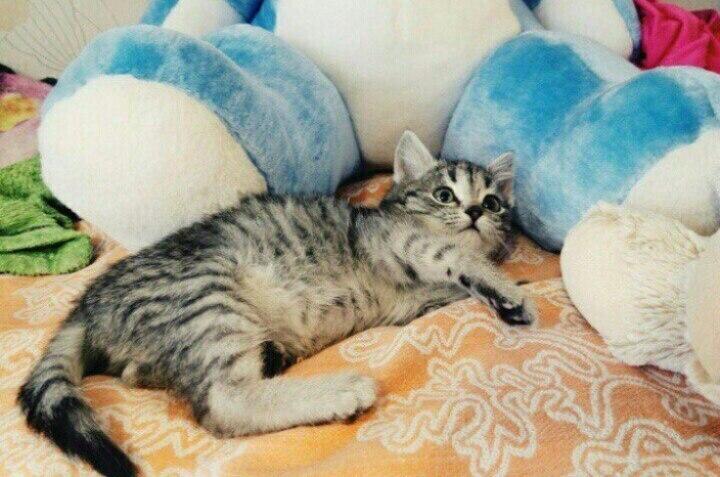Житель Оби спас котёнка от обморожения