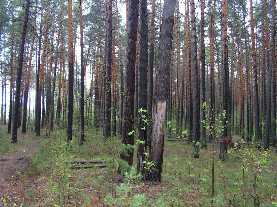 Шлюзовской лес предлагают сделать памятником природы