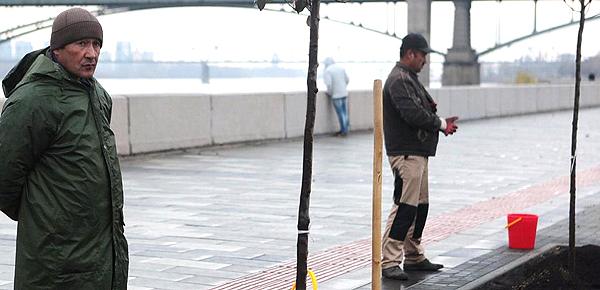 Яблони «Рудольф» с Михайловской набережной вылечат от депрессии в питомнике