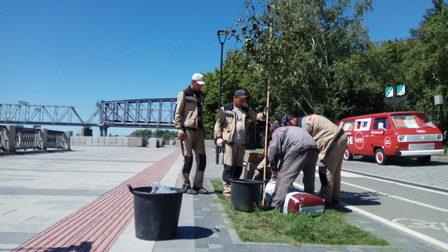 На набережной Оби в Новосибирске снова высадили яблони «Рудольф»
