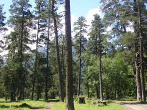 В НГПУ обсудили проблемы Заельцовского парка