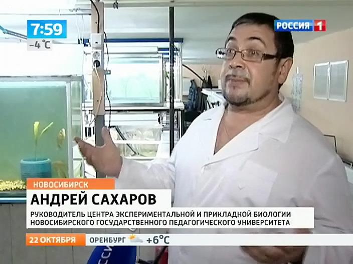Новосибирские ученые придумали, как заставить рыбу прибавлять в весе в два раза быстрее