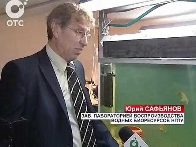 Новосибирские ученые научились ускорять рост промысловых рыб в два раза