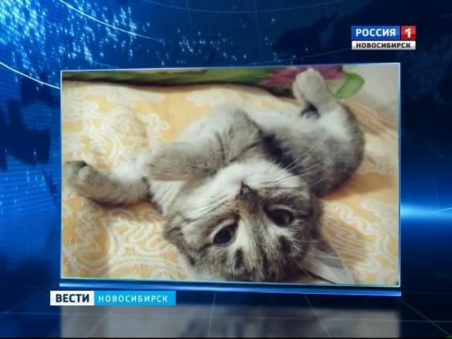 Автомобилист из Оби спас котенка с обмороженными лапами